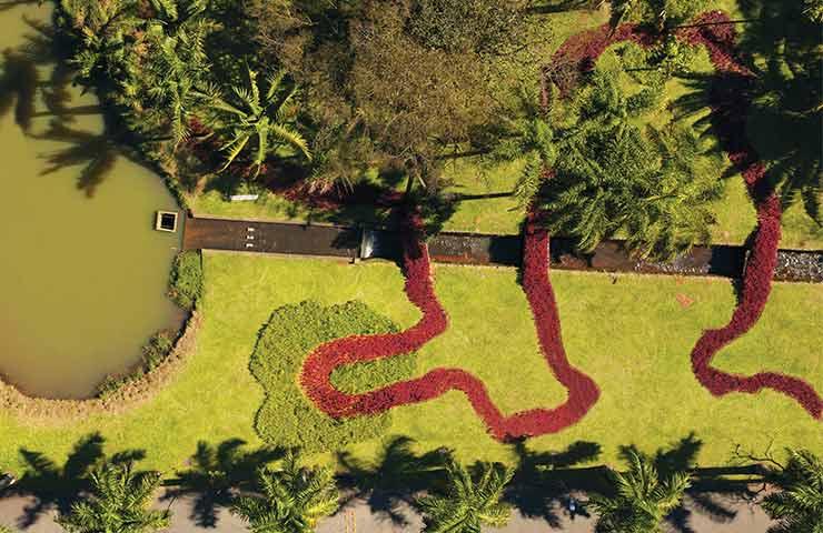 flor do jardim tiete : flor do jardim tiete: Paul Ganem presenteia São Paulo com landscape art no Jardim Botânico